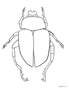 429px-Draw-a-Scarab-Beetle-Step-7